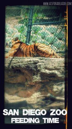 Our San Diego Zoo Trip in Photos! #travel #aisforadelaide