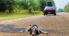 Les abandons d'animaux en hausse de 21% sur la première période estivale
