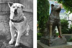Hachiko - The True Story of a Loyal Dog :Hachiko was a real dog, he belonged to a Tokyo University professor named Eisaburo Ueno in the...  *Click to read this amazing story. (This sounds like another dog I've read about and saw a movie of.)
