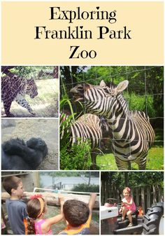 East Coast Mama: Things to do in Boston with Kids ~ Exploring Franklin Park Zoo