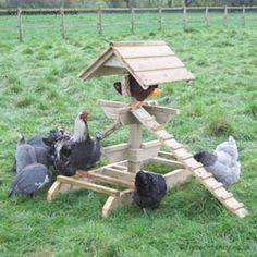 The Chicken Jungle Gym