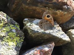 """Kim French on Twitter: """"On a dry stone wall"""""""