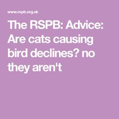 The RSPB: Advice: Are cats causing bird declines? no they aren't