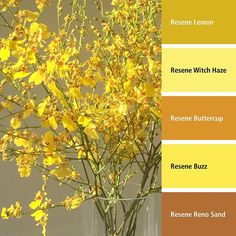 Lifemark Product Partners Resene have an array of beautiful nature-inspired colours to decorate your Lifemark homes with Resene Colours, Color Palette Generator, Wall Exterior, Inspirational Wallpapers, Hello Sunshine, Better Together, Home Look, Colour Schemes, Beautiful Sunset