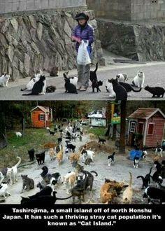 Cat island, just cos it looks so weird!