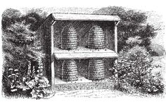 For centuries, beekeepers have used �skeps,� carefully designed domed baskets, to house their hives. Learn how to make one.