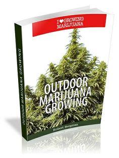 57 Best 420 Blaze It Images Bongs Cannabis Hemp