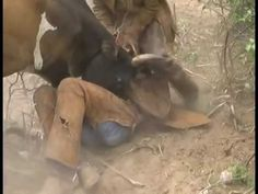 Natal do Everaldo Nascimento: Vaqueiros pegando boi