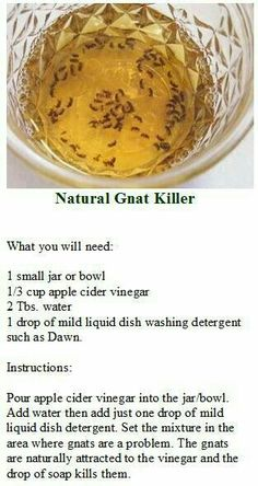 Gnats please go away! This works! You can mix a smaller amount since gnats are so small and put in a very small container. Household Cleaning Tips, House Cleaning Tips, Diy Cleaning Products, Cleaning Hacks, Apple Cider Vinegar Water, White Vinegar, How To Get Rid Of Gnats, Diy Pest Control, Bug Control