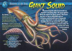 Giant Squid - Wierd N& Creatures Wiki Wild Creatures, Ocean Creatures, Colossal Squid, Octopus Squid, Giant Squid, Saltwater Tank, Saltwater Aquarium, Reptile Cage, Reptile Enclosure