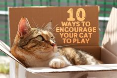 10 Ways To Encourage Your Cat To Play :)