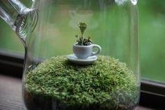 tea-rrarium awww