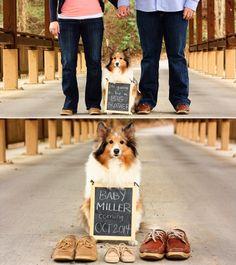 dog pregnancy announcement