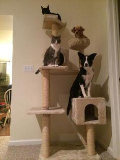 dogs on cat tree!