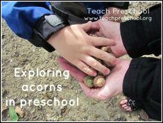 Exploring acorns in preschool by Teach Preschool