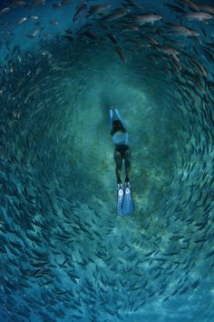 LIFE UNDER THE WAVES,   Snorkeler in School of Trevally A snorkeler...
