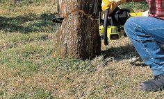 Abattre un arbre en toute sécurité