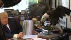 DONALD TRUMP ATTACKED BY THE EAGLE - Google Search