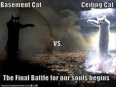 basement cat vs ceiling cat