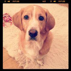 My cutie! Bassador