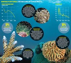 Coral alert: destruction of reefs 'accelerating' with half destroyed over past 30 years - Climate Change - Environment - The Independent Global Warming Project, Ocean Acidification, Scuba Diving Quotes, Marine Biology, Wildlife Conservation, Color Changing Led, Great Barrier Reef, Marine Life, Destruction
