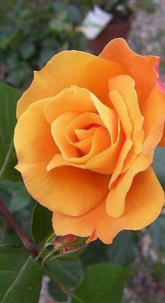 .orange flower