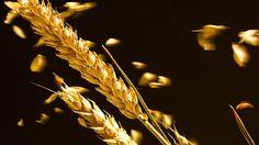 In questo articolo descriverò una tipica dieta senza glutine per coloro che soffrissero di sensibilità o intolleranza alla sostanza lipoproteica in questione e volessero utilizzare dei cereali alternativi per sconfiggere gonfiori e pesantezza.