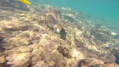 Snorkel em Makena Cove