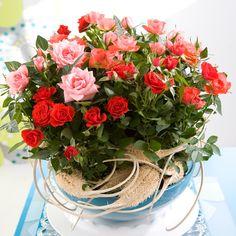 Remportez ce bouquet de roses d'une valeur de 150 euros en repinant cette épingle et en vous abonnant à notre compte.   #Contest #Roses #Rose #Flowers #Concours #SaintValentin #StValentin #Bouquet