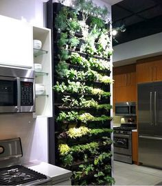 Wall decoration with Plants
