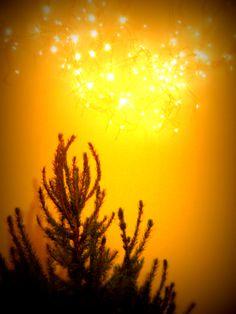 Natale 2013: pronte alla discesa - Foto Federica Segalini