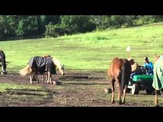How to Improve Horse Behavior At Feeding Time - Parelli Natural Horsemanship - Horse Training