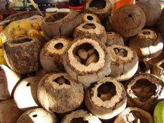 Castanha-do-Pará - Brasil   -  Brazil nut-Brazil.