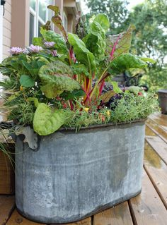 #pottery #planters #containers #pots #gardening  Swiss Chard in a metal wash tub - gorgeous container planter.