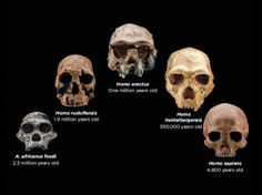 human evolution: Link:http://myscienceacademy.org/2013/05/24/why-fire-makes-us-human/
