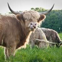 McLaughlin Farms, LTD | Local, pastured raised, naturally healthy meat at a reasonable cost.