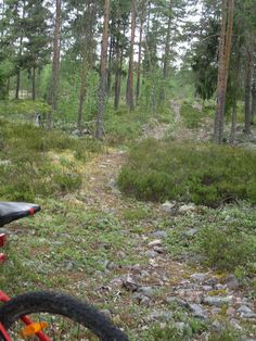 Let it Roll: In my Swedish backyard Lets Roll, Mountain Biking, Country Roads, Backyard, Blog, Patio, Backyards, Blogging