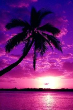 Palm Tree Sunset Wallpaper | palm tree purple sunset | Wallpapers With HD Quality