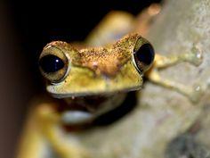 Cutie! Frog by Hello Treacle, via Flickr