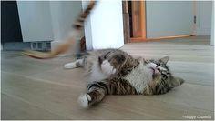 Aujourd'hui je vous explique comment jouer avec son chat et quels jouets lui offrir. Quand on adopte un chat, on se soucie généralement en premier de lui offrir unenourriture pour chat de qualitéet à lui apporterles soins dont il a besoin. Puis vient la question des jeux. Comment faire pour que mon chaton ne s'ennuie [...]