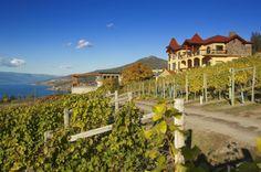 Gray Monk Estate Winey, beautiful setting in the vineyards overlooking #Okanagan Lake~ Okanagan, # British Columbia