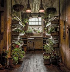 The Potting Shed: A Green Oasis in Alexandria This restaurant in Alexandria, Australia, is a green oasis. Plants adorn every wall and nook while beautiful reclaimed wood furniture makes for a cozy interior.The Potting Shed doesn't only serve amazing food, The Grounds Of Alexandria, Alexandria Sydney, Potting Sheds, Potting Benches, Shed Plans, Barn Plans, Garage Plans, Hanging Plants, Hanging Baskets