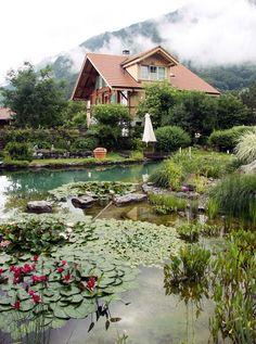 natural swimming pool pond aquatic plants - BioNova - chemica-free pool