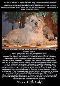 A 12lb, 14yo, deaf Yorkie mix, Lady, followed her beloved mom's grandchildren to a sunny waterhole on a peaceful June day, when she was suddenly and brutally attacked by a neighbor's loose pit bull. The children watched the whole thing. Left gutted, her intestines trailing in the dirt, the faithful little old dog started her slow and painful journey home to her mom. She was too broken to be fixed and had to be euthanized.