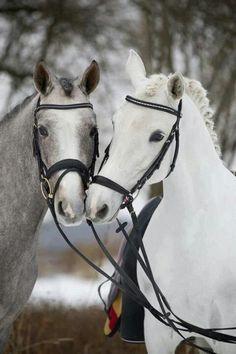 Horse Best Friends