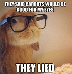 This bunny is funny and adorable . 25 Best Funny animal Quotes and Funny Memes Funny Bunnies, Cute Funny Animals, Cute Baby Animals, Funny Cute, The Funny, Funny Shit, Funny Memes, Hilarious, Super Funny