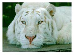 felinos lindos - Pesquisa Google