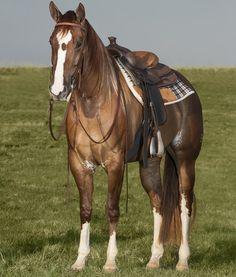 Sheza King EK Beautiful Creatures, Most Beautiful, Wildlife, Painted Horses, Quarter Horses, King, American, Painting, Animals