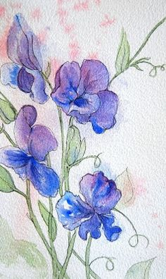 New Watercolor Painting: Sweet Pea Symphony – Angela Fehr watercolours