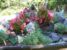 outdoor fairy garden plants for colorado | ... warm weather does for flowers. The fairies have been busy gardening